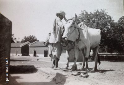 drawing water wells agra 1941